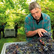 La Carta viticola del Trentino